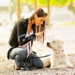 Pet Behavorial Counseling