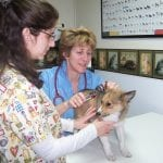 Physical Examinations, A Little Veterinary Clinic