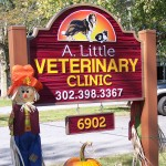 A. Little Vet Practice information